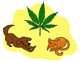 cbd animals